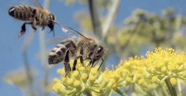 allergia ad imenotteri: api, vespe e calabroni