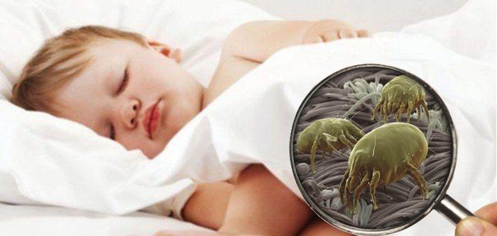 L acaro della polvere un allergene di casa - Allergia acari materasso ...