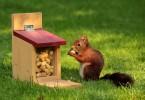 arachidi_scoiattolo
