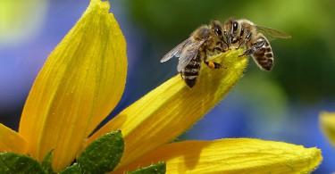 allergia-api