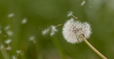calendario-pollinico