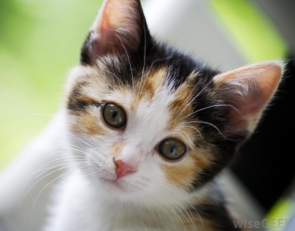 Foto di un cucciolo di gatto