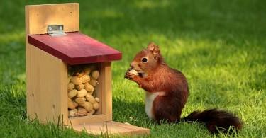 scoiattolo e arachidi