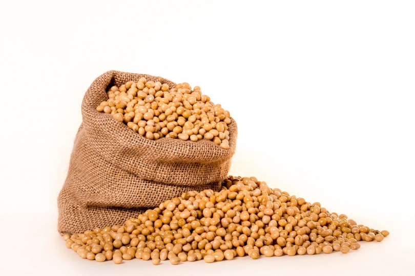 allergia alla soia