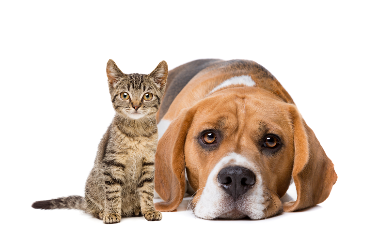 allergia al cane e al gatto